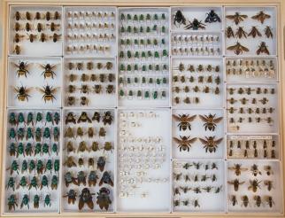 bee_specimens